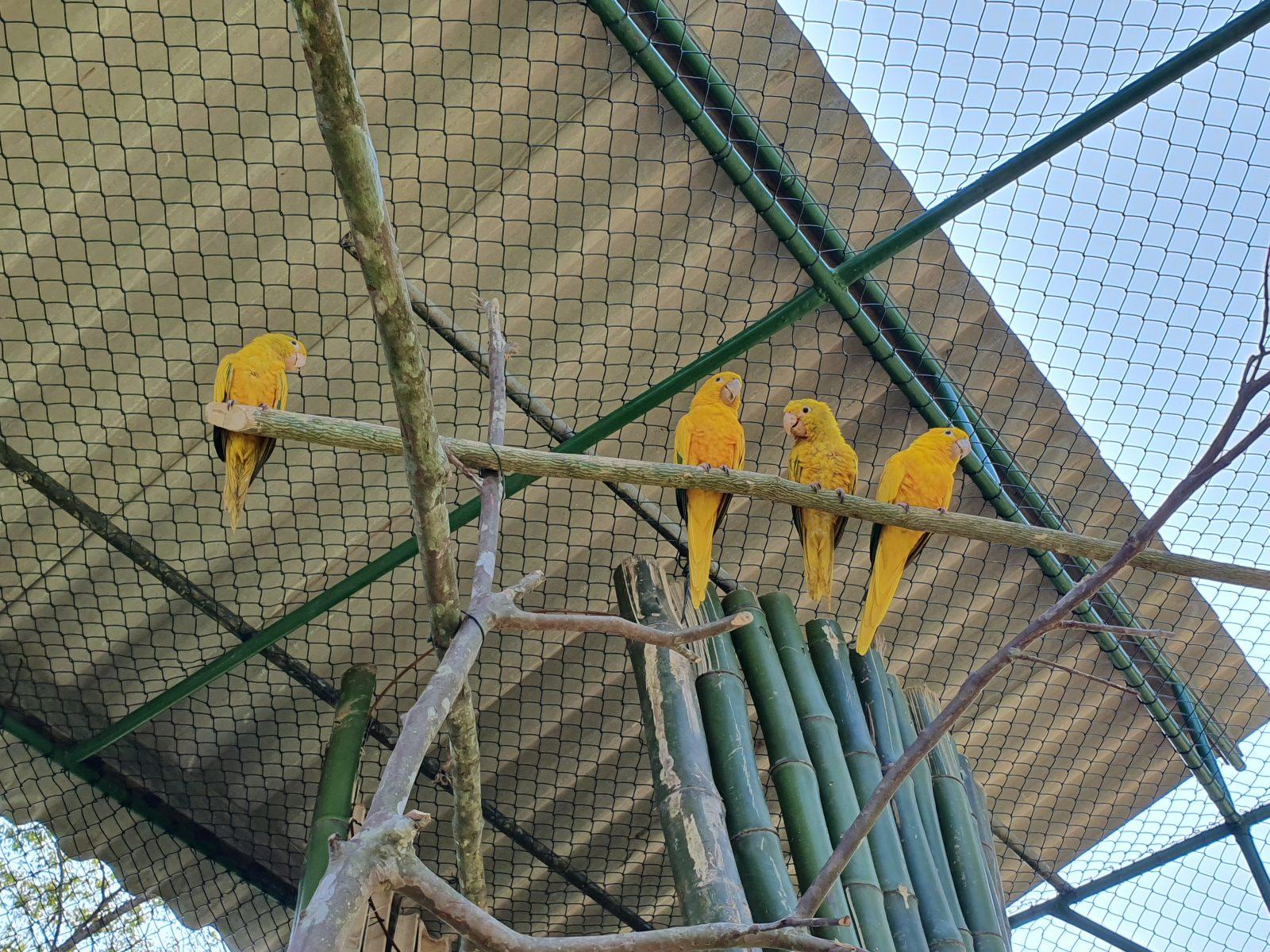 Novo recinto do Zoobotânico de Brusque vai abrigar família de Ararajuba
