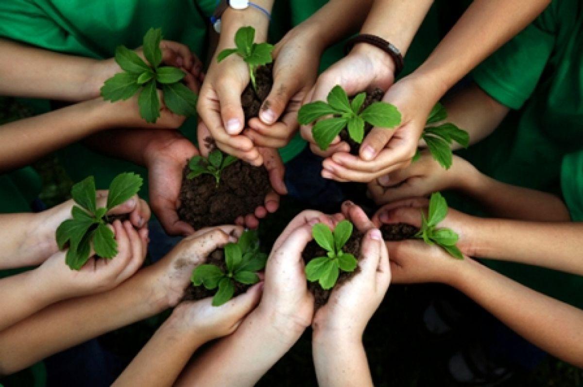 Fundema realiza plantio de compensação de emissão de CO2