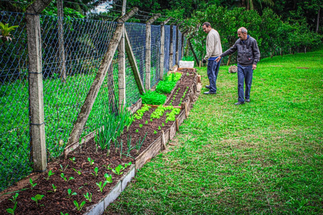 Servidores do Samae criam horta comunitária na ETA Central