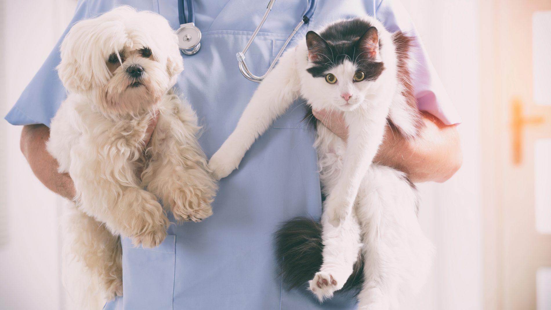 Edital para credenciamento de clínicas veterinárias para castrar animais está aberto