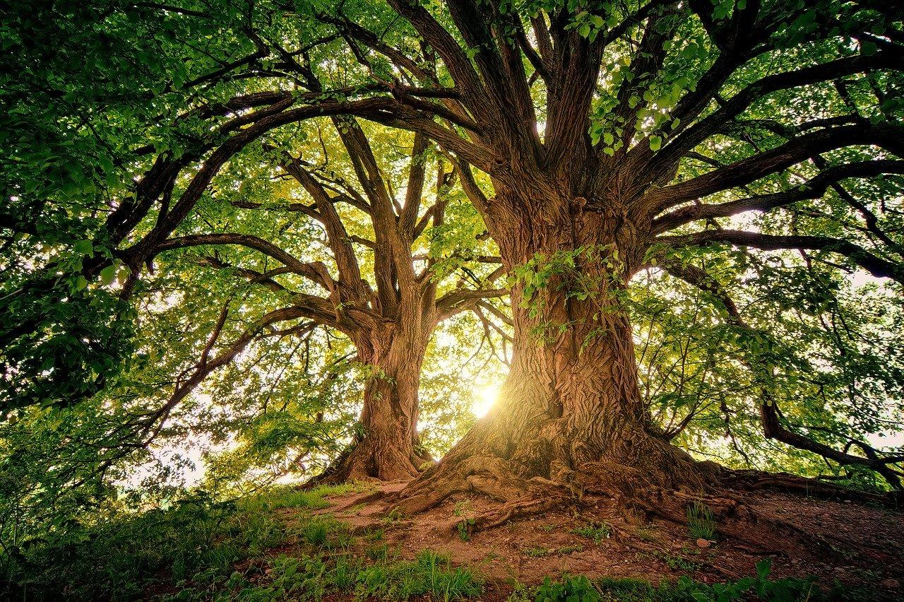 Samae divulga ações para o Dia Mundial da Árvore