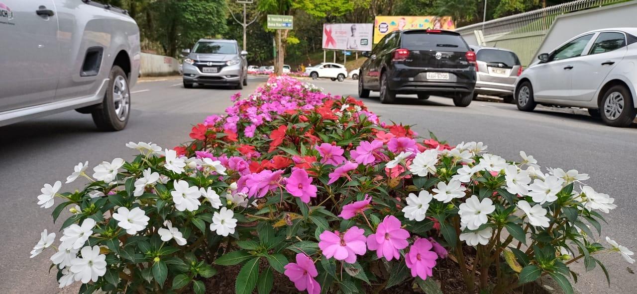 Canteiros ainda mais floridos anunciam a chegada da Primavera